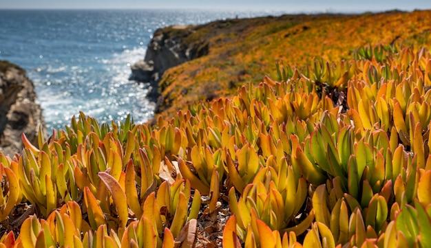 Il tramonto di vista sul mare con le piante si chiude su
