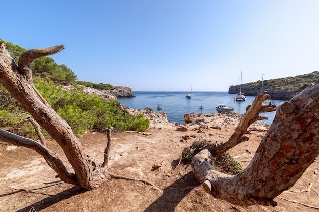 Vista sul mare della famosa baia di cala turqueta con alberi in primo piano e barche in mare. minorca, isole baleari, spagna
