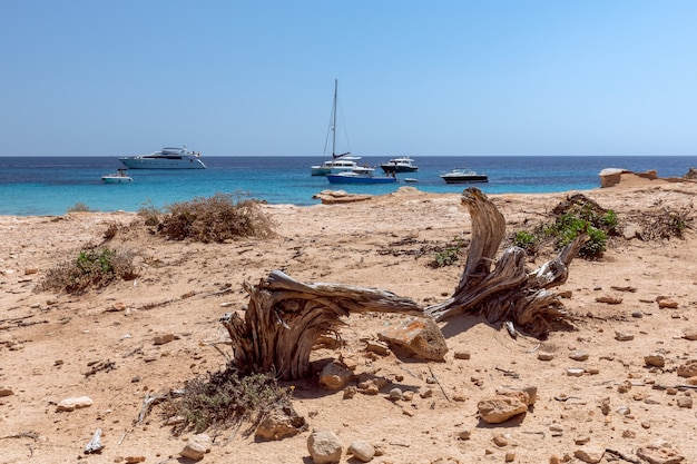 Vista sul mare con le radici degli alberi essiccati al sole e il mare azzurro dell'isola di ibiza