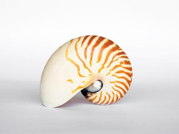 Conchiglia isolata su superficie bianca. bella forma naturale di conchiglia.