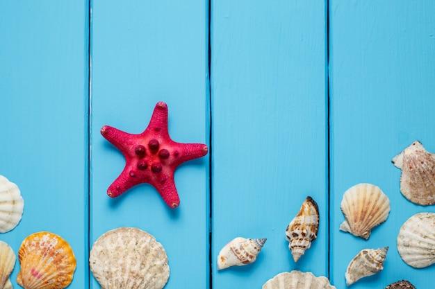 Struttura delle conchiglie su fondo di legno blu