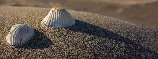 Conchiglie sulla sabbia, immagine banner con spazio copia