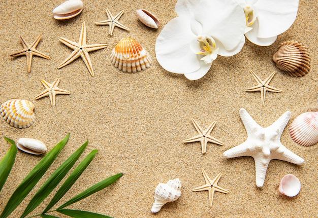 Conchiglie sulla sabbia