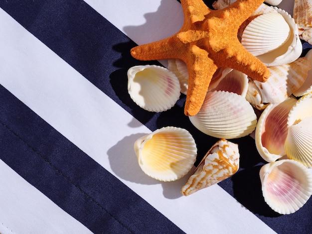 Conchiglie e stelle marine con ombra dura su uno sfondo colorato, vista dall'alto.