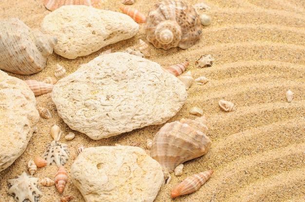 Seashells pietre sulla superficie beige sabbia sabbia texture