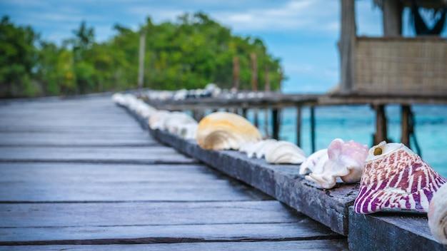 Conchiglie sul molo in legno di una famiglia, isola di gam, papua occidentale, raja ampat, indonesia.