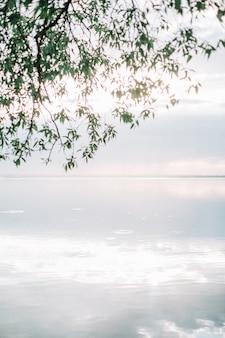 Vista sul mare con i rami degli alberi.