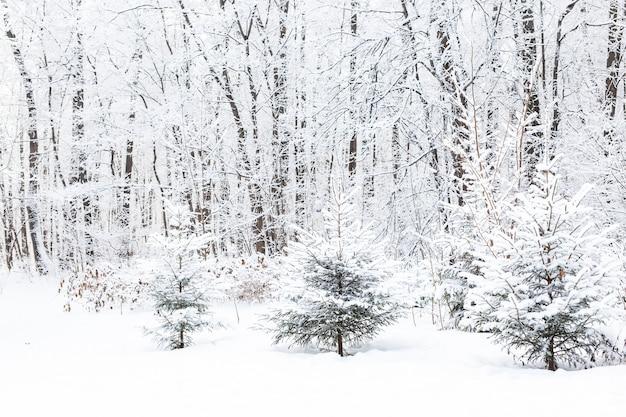 Concetto di stagione e natura - winter park nella neve.