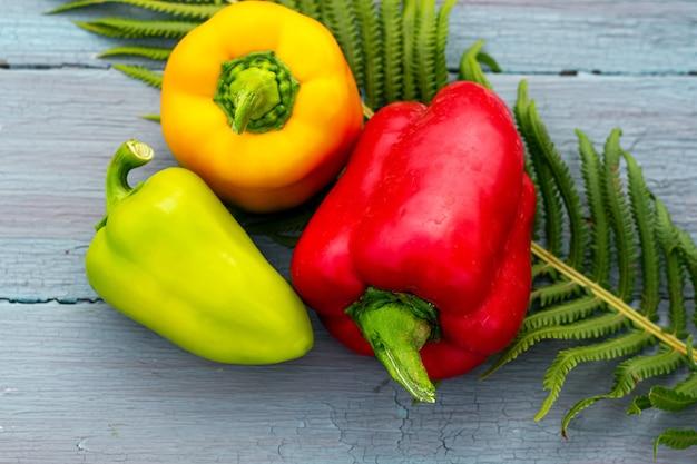 Peperoni dolci gialli rossi verdi gialli stagionali del raccolto di autunno sulla foglia di felce del fondo di legno blu