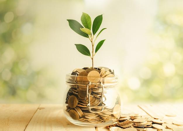 Semina la crescita in bottiglia risparmio di monete - concetto di crescita degli investimenti