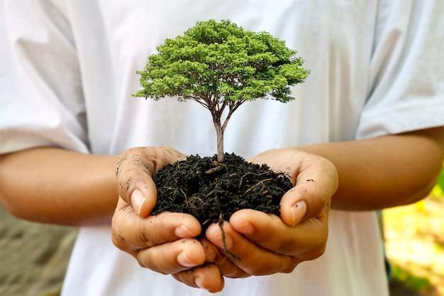 Una piantina che cresce sul terreno nella mano di una donna, nell'imboschimento e nel concetto di conservazione della foresta.
