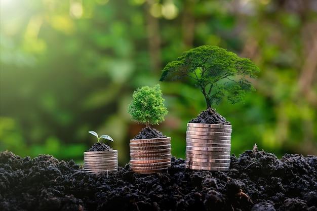 Piantina sull'investimento per la crescita delle piante di denaro, profitto dal crescente concetto di business