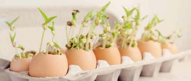 Piante da semenzale in gusci d'uovo, eco giardinaggio, montessori, educazione, riutilizzo, concetto di vita sostenibile eco verde, plastica libera, concetto zero rifiuti