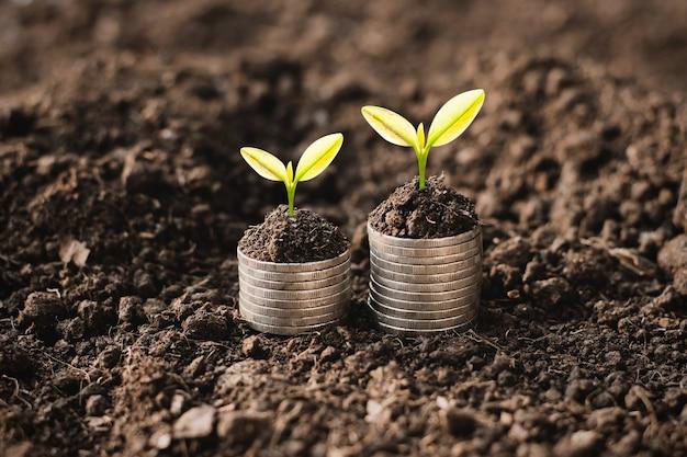 Le piantine stanno crescendo sulle monete
