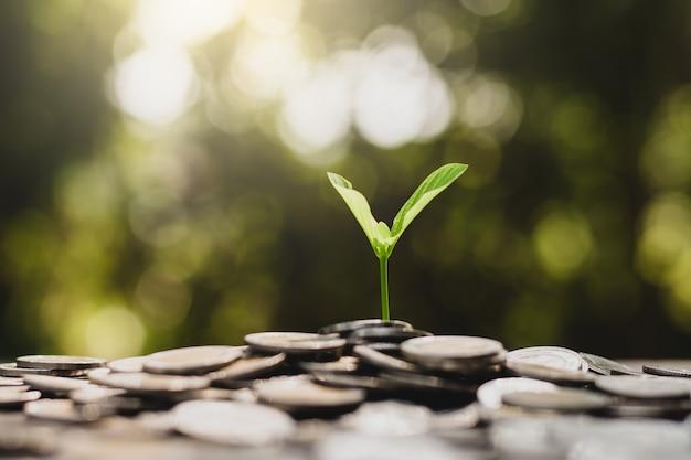 Le piantine stanno crescendo dalla pila di monete.
