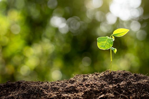 Le piantine stanno crescendo dal terreno.