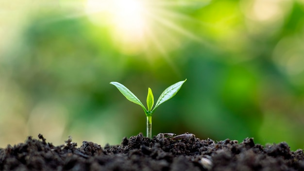 Le piantine crescono da un terreno fertile e il sole del mattino splende