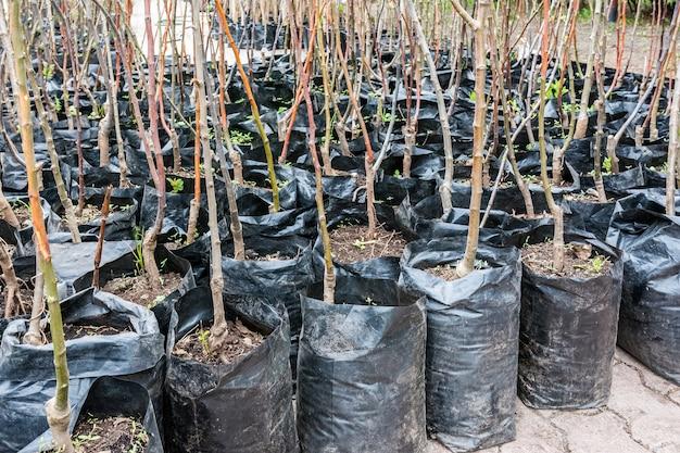 In fiera si vendono piantine di vari alberi da frutto