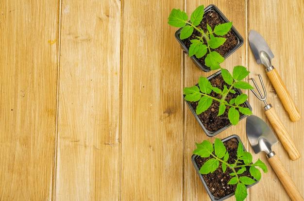 Piantine di colture orticole su superficie in legno