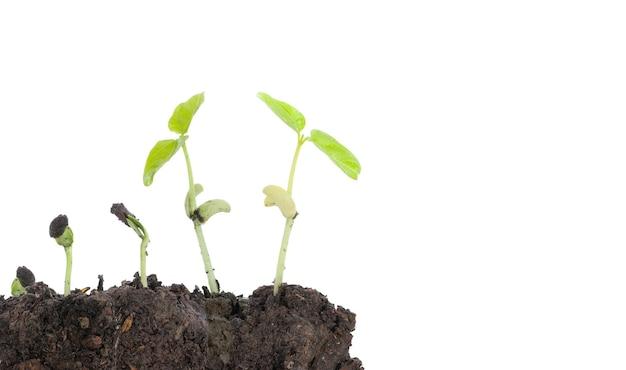 I semi germinano dal terreno