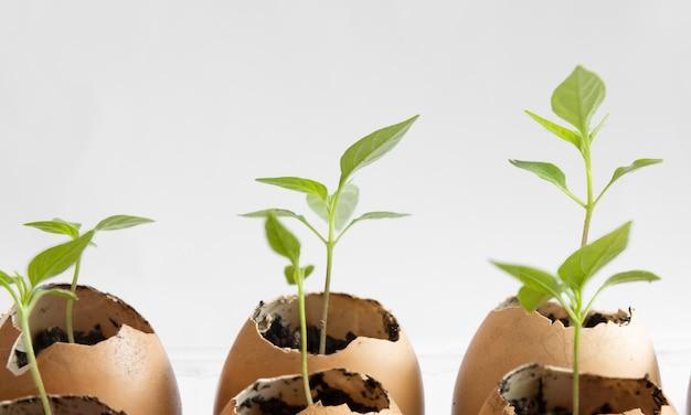 Semi che piantano in gusci d'uovo su bianco