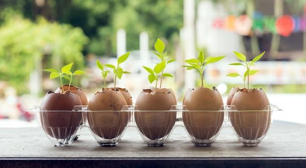 Semi che piantano in gusci d'uovo sulla tavola di legno con la natura verde