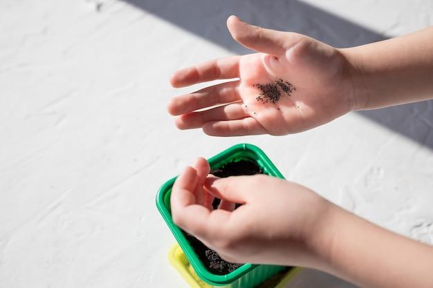 Semi di piante e fiori in una scatola di plastica contenitore per piantine con la mano del bambino