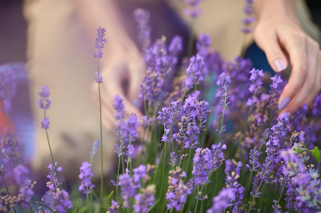 Messa a fuoco selettiva delle mani femminili che toccano delicatamente i fiori viola in un campo di lavanda infinito. irriconoscibile giovane donna che gode del raccolto estivo, sole caldo. concetto di bellezza della natura.