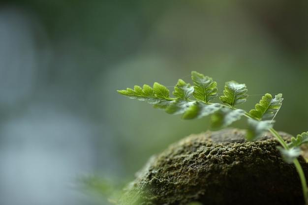 Felce di messa a fuoco selettiva sulla roccia con muschio verde fogliame luminoso muschio closeup