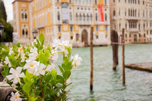 Fuoco selettivo della pianta verde con le costruzioni antiche e il canale idrico su fondo a venezia, italia.