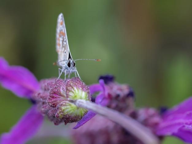 Messa a fuoco selettiva di una bellissima farfalla sul fiore viola