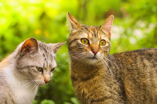 Colpo di messa a fuoco selettiva di un paio di gatti