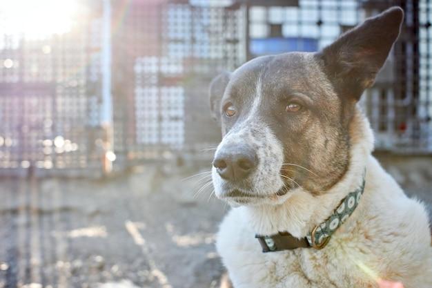 Messa a fuoco selettiva di un simpatico cane in un rifugio per cani