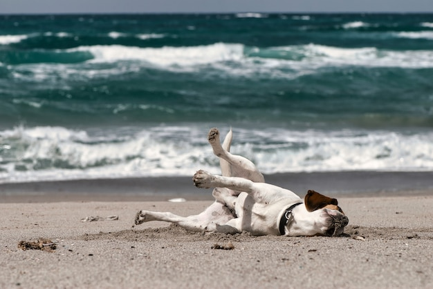 Colpo di messa a fuoco selettiva di un cane divertente sdraiato su una sabbia