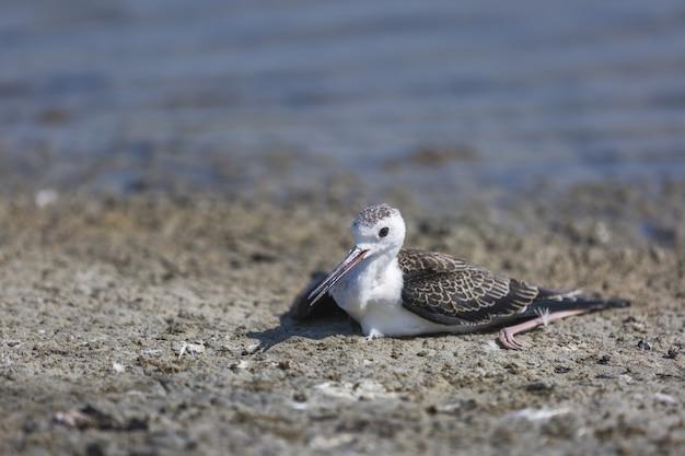 Colpo di messa a fuoco selettiva di un piccolo uccello bianco seduto per terra a
