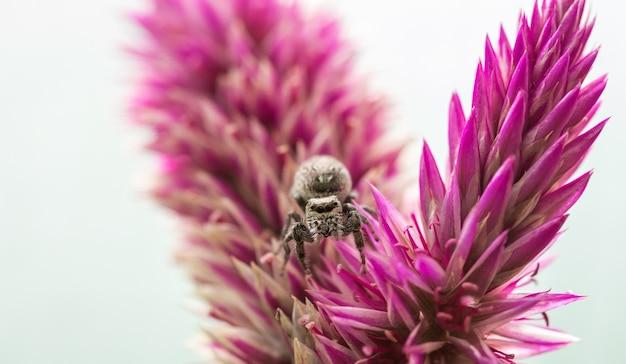 Colpo di messa a fuoco selettiva di un ragno su una pianta viola