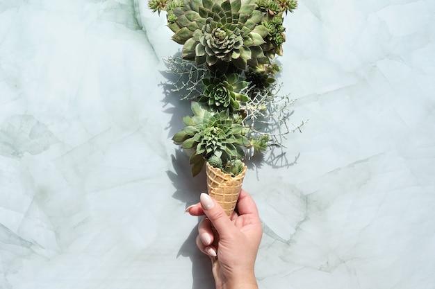 Sempervivum piante succulente in corno gelato cialda tenuto in mano femminile.
