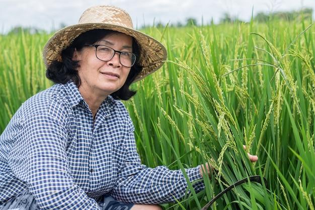Senior agricoltore donna seduta e risone falce presso l'azienda agricola