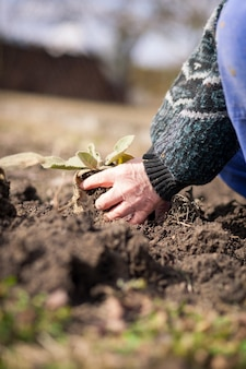 Mani dell'uomo anziano che lavorano nel suo enorme giardino, preparando il terreno per la semina