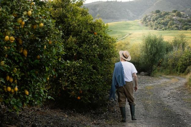 Uomo maggiore che raccoglie aranci freschi da solo