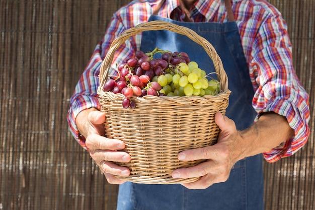 Uomo anziano che tiene in mano il raccolto dell'uva