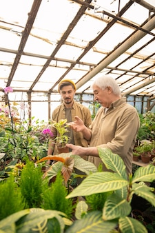 Uomo maggiore che mostra le foglie delle piante malate e spiega al giovane lavoratore come spruzzare le foglie dai pesticidi