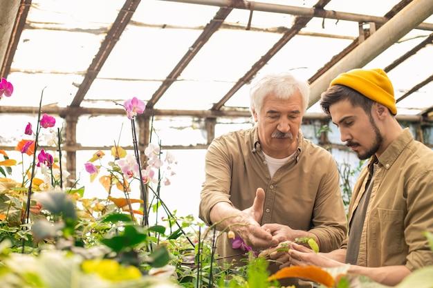 Uomo anziano con i baffi che punta alle foglie mentre insegna al figlio a prendersi cura delle piante in serra