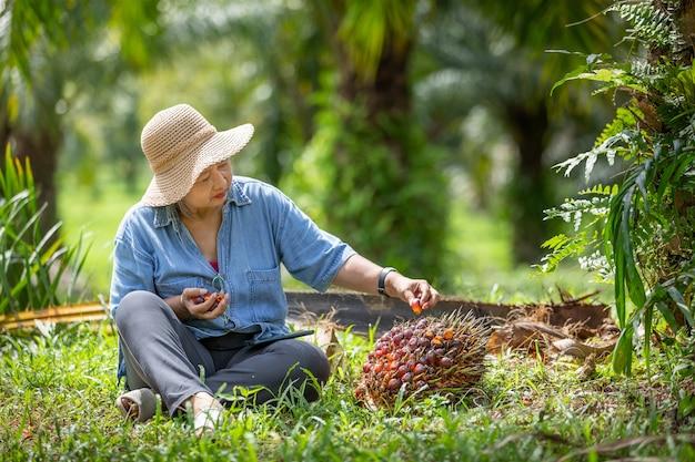 Senior proprietario asia donna controllando il mazzo di semi di palma rossa in giardino.