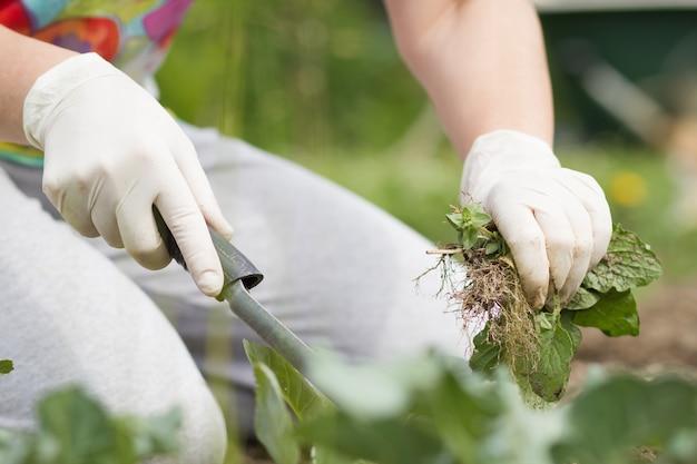Una donna / ragazza / signora maggiore che tira fuori alcune erbacce con prato inglese nero fertile sul suo giardino botanico enorme / grande durante la primavera / estate adorabile; lavoro duro