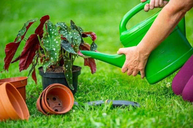 Donna maggiore che innaffia le sue nuove piante o fiori nell'enorme giardino, concetto di giardinaggio