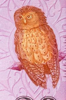 Serendib scops owl un ritratto dal denaro dello sri lanka