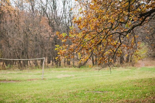 Paesaggio sereno con fogliame secco arancione sugli alberi, prato con erba verde, boschi e nessuno