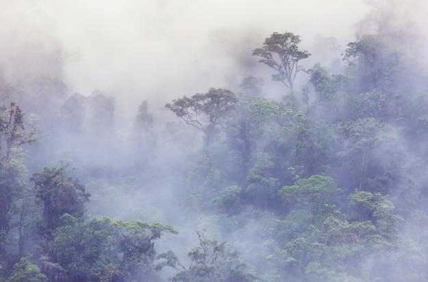 Serenity foresta pluviale in costa rica