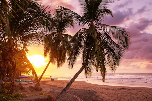 Serenità sulla spiaggia tropicale